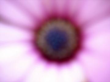medium_DSC01592_2.jpg