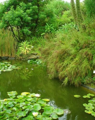 Dans le jardin exotique de Roscoff.jpg