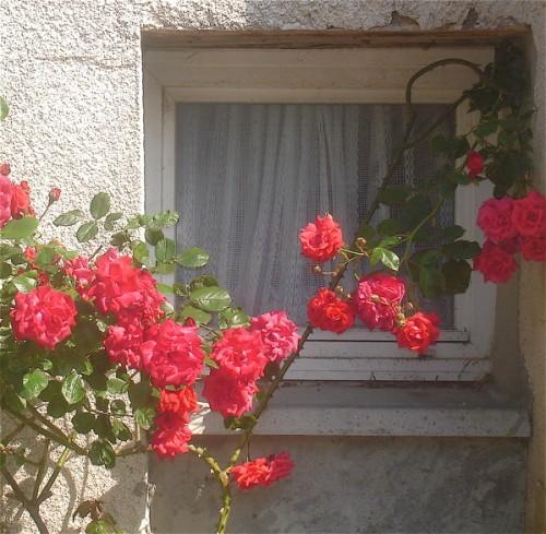 Regarder les roses devant la fen tre laboratoire du r ve for Devant la fenetre