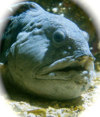 la rochelle,musée des automates,aquarium,art,photographies,poisson, têtes