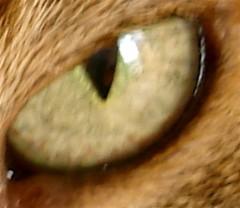 L'oeil du chat.jpg