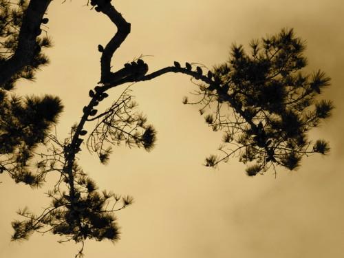 écriture,société,nature,jung,poésie,culture,photo