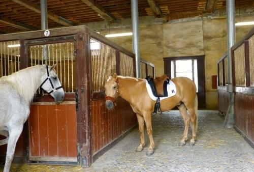 chevaux,tarbes,haras,spectacles,photos,vacances,ariaga