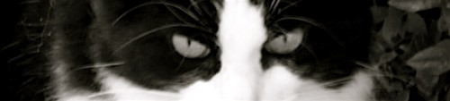 Chat noir et blanc.jpg