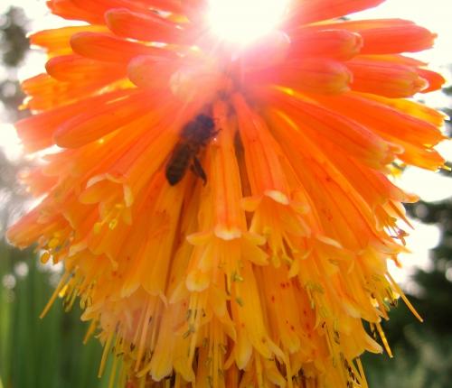 alchimie,poésie,nature,jardinage,amour,philosophie,spiritualité,photo