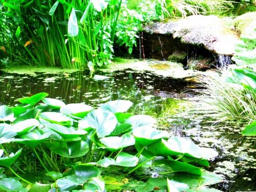 spiritualité,alchimie,philosophie,jardin,nature,écriture