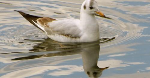 Oiseau en miroir.jpg