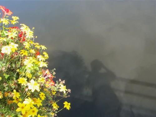 nature,art,photos,insolite,eau,reflet,fleurs