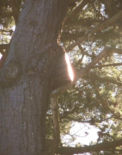 écriture,poésie,nature,arbres,spiritualité,philosophie,alchimie