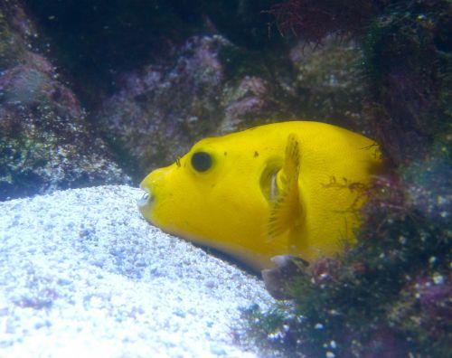 aquarium,la rochelle,poissons,nature,photos,voyage,vacances,visite