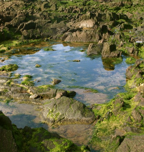 Mare sur une plage bretonne.jpg