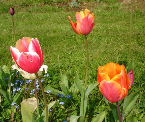 Fleurs pour le bouquet de Jung.jpg