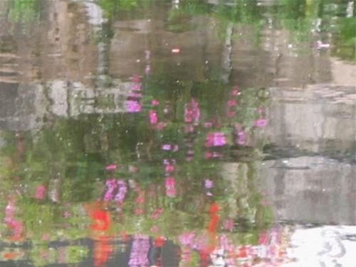 reflet de fleurs.jpg